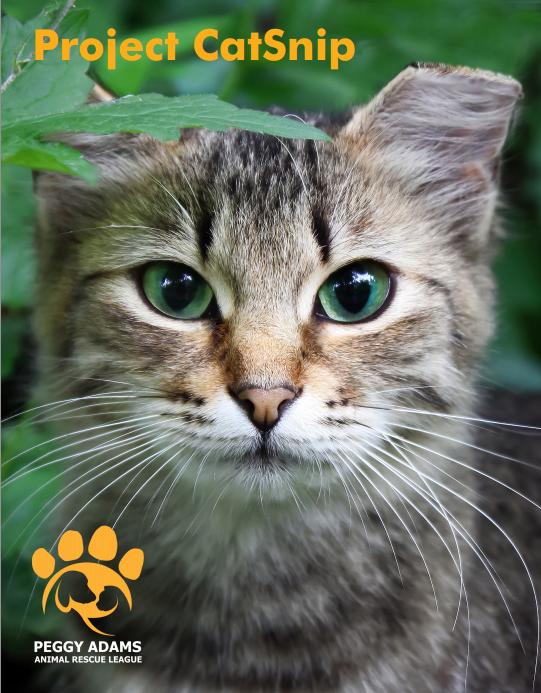 catsnipcover